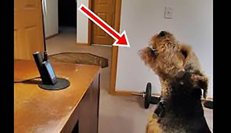 She Told Her Dog She Loved Him. His Response? I Couldn't Believe It! - https://www.cutesystuff.com/told-dog-loved-response-couldnt-believe/?utm_source=PN&utm_medium=Cutesy+Stuff&utm_campaign=SNAP