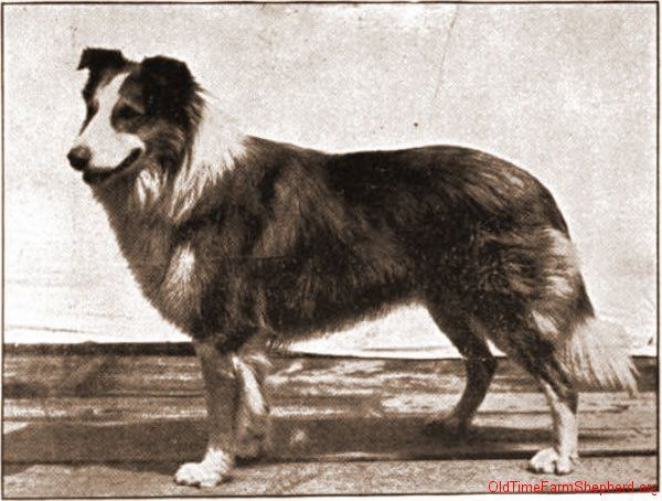 The early history of collies, written by James Watson in 1906