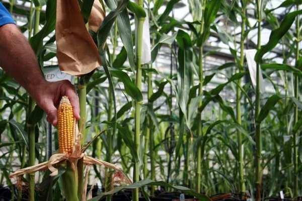 Big agriculture pumps $10 million into anti-GMO-labeling campaign