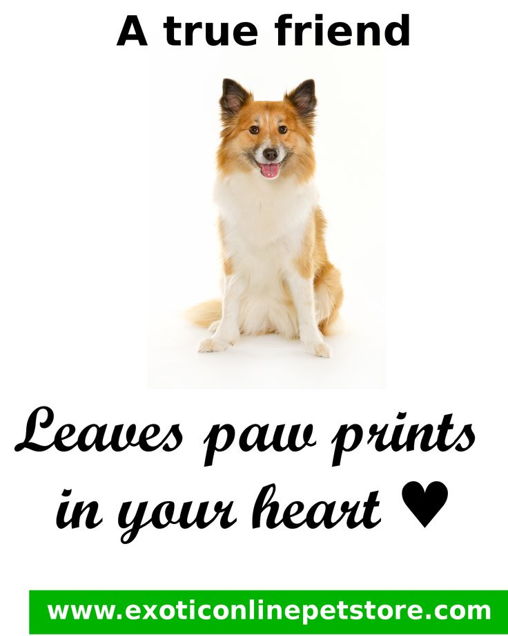 """A True friend Leaves paw prints in your heart <3."" #friends #paw #heart #love #dogs http://www.exoticonlinepetstore.com/"