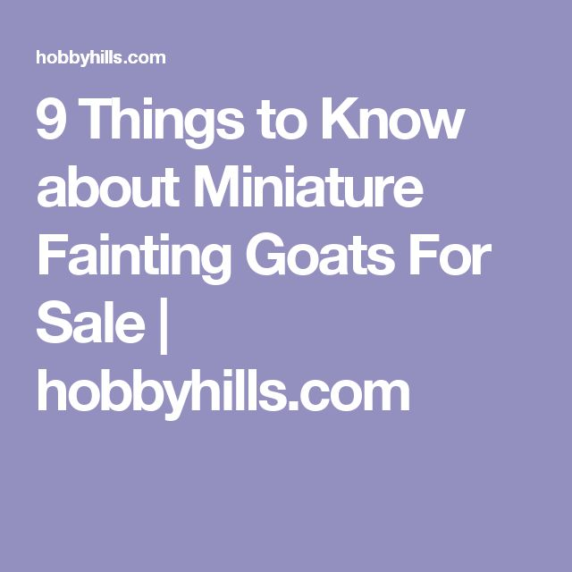 9 Things to Know about Miniature Fainting Goats For Sale | hobbyhills.com
