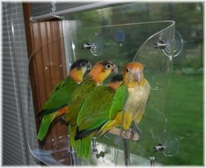 Medium Wingdow Seat: Bird Cages for Sale - Bird Cages Shipped Free, Price Match+ Means The Best Prices From The Most Respected Retailer of Parrot Cages And Other Bird Cages For Sale