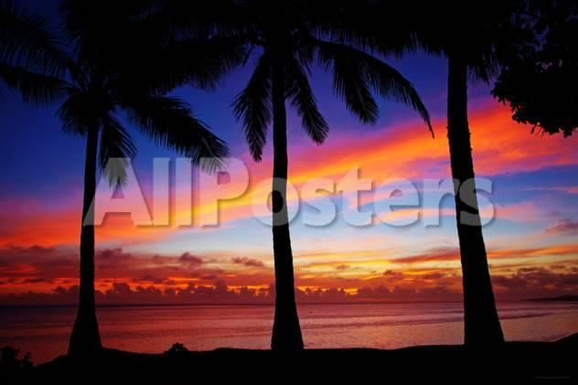 Palm Tree Sunset Landscapes Poster - 91 x 61 cm