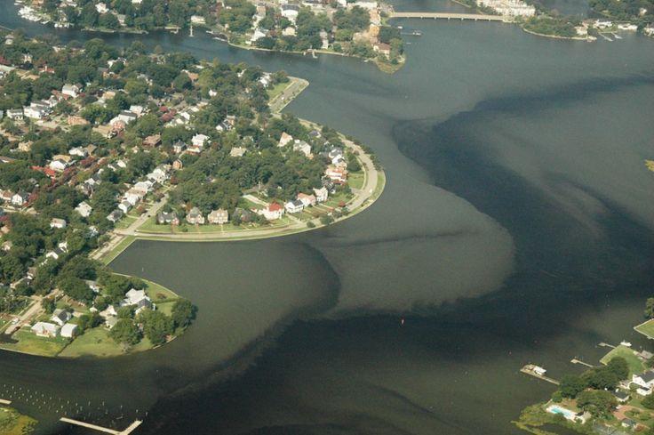An algal bloom in Norfolk's Lafayette River.
