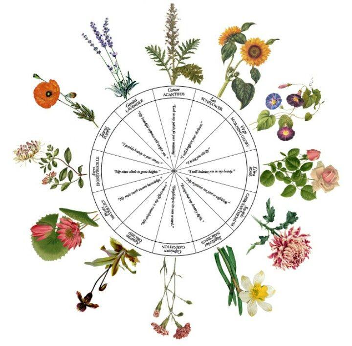 scorpio astrology flower