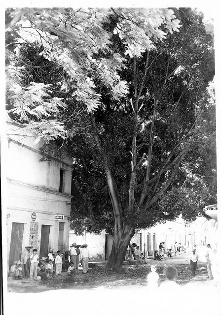 al palo verde mercado juchipila by xochiphoto, via Flickr