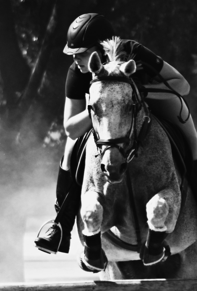 Professional Horse Jumping Photography | www.imgkid.com ...