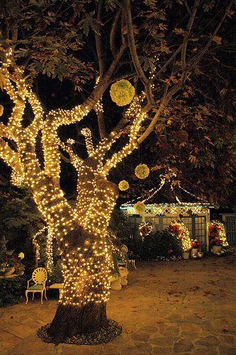 lighted tree: Dance Parties, Secret Gardens, Parties Gardens, String Lights, Trees, Outdoor Parties, Parties Ideas, Gardens Parties, Parties Lights