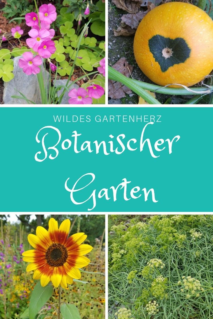 Der Botanische Garten Dusseldorf Botanischer Garten Garten Garten Anlegen