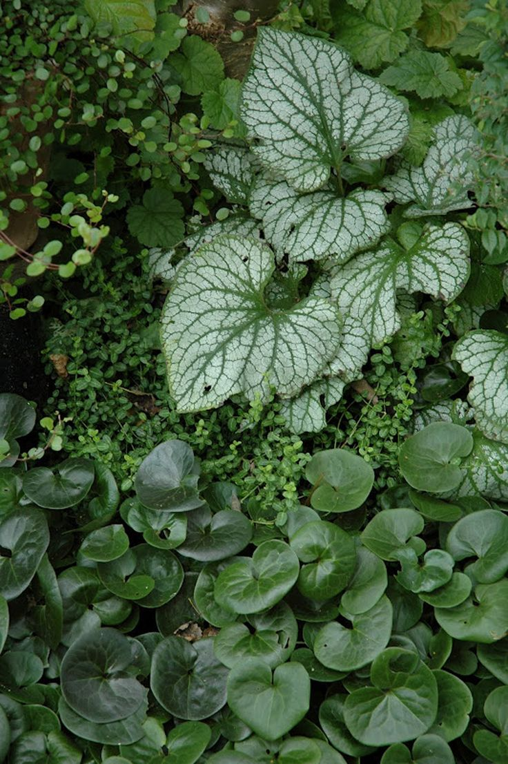 106 best green gardens images on pinterest   landscaping, topiary