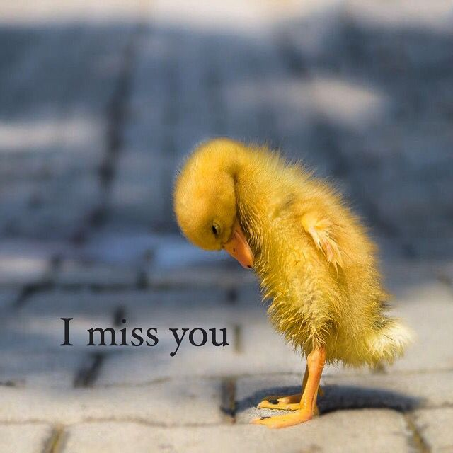 I miss you every single moment of every day