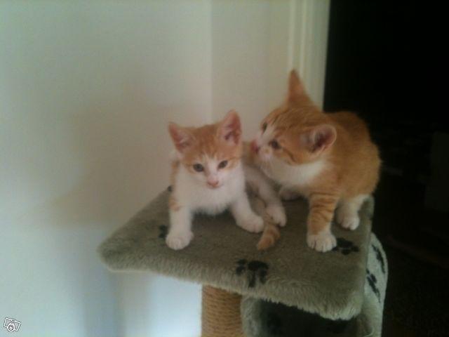 Två jättesöta kattungar