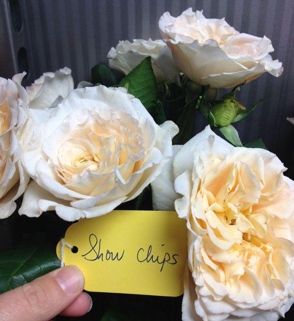 Cream Garden Rose 1788 best flowers images on pinterest | ranunculus, flower names