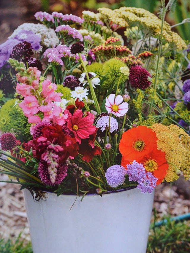 The Cut Flower Patch ~ a guide to growing your own beautiful cut flowers throughout the year!