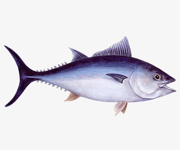 Fresh Fish In The Sea Fish Clipart Sea Clipart Fish Png Transparent Clipart Image And Psd File For Free Download Sea Fish Fish Clipart Fish Avidari and is about animal source foods, aquarium fish, bass, black pepper, bream. fresh fish in the sea fish clipart