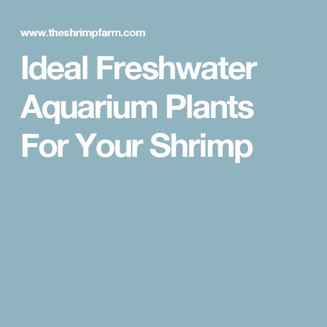 Ideal Freshwater Aquarium Plants For Your Shrimp