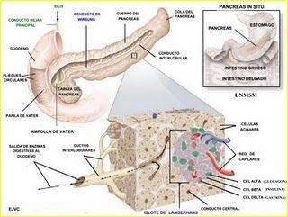 8951432  Tumor de las celulas de los islotes pancreáticos.