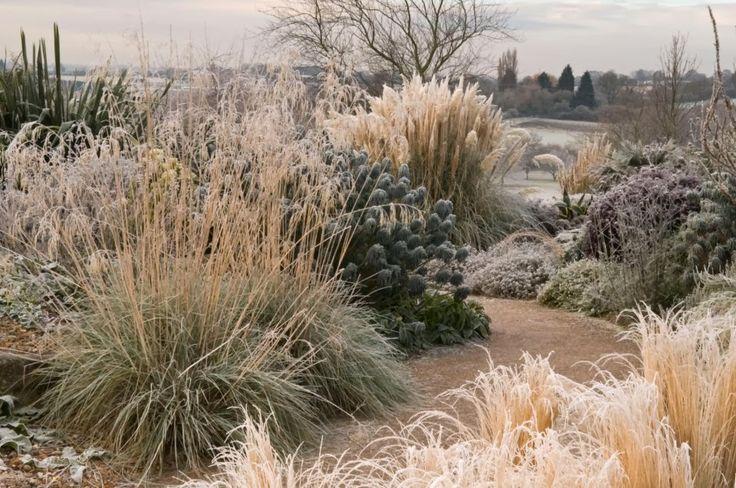 Blog de la paisajista Isabel Alguacil sobre proyectos de paisajismo, diseño de jardines, plantas, jardinería, garden tours y visitas a jardines