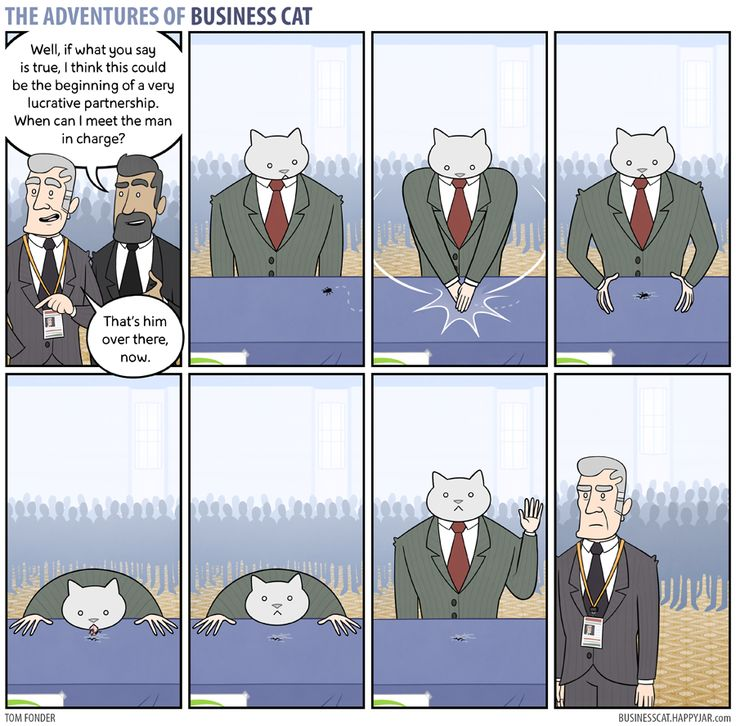Business Cat - Networking