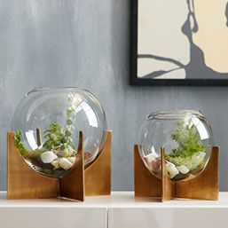 Round out your indoor garden with the modern shape of the Cross Base Terrariums. The simple globe container and antique brass-finished base provide the perfect home for succulents and small flowers.
