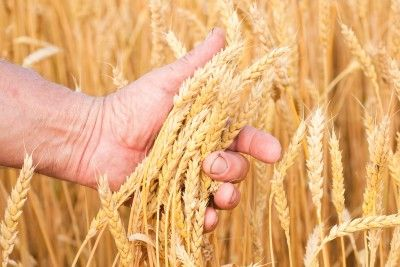We have not been given a date for Shavuot, but are to count towards this day. How are we to observe this feast and what other wonderful lessons could we learn?