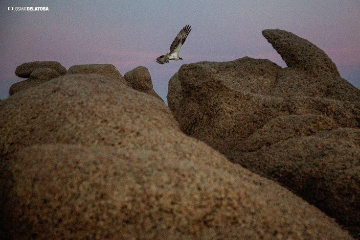 Free as a bird  #josafatdelatoba #cabophotographer #loscabos #cabosanlucas #bajacaliforniasur #bird