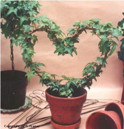 Here's an idea for the Valentine that loves plants - Recycled a wire coat hanger, a clay pot (thoroughly cleaned), and a bit of ivy cut from an ivy plant that's overgrown. But be sure to use new potting soil. To make your own, just twist or bend the hanger into a  heart shape, stick the hook end into the potted soil, and then wrap an ivy around the wire form. So easy!