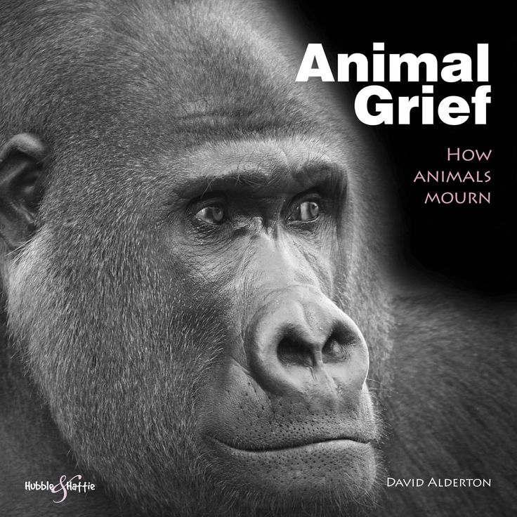 Animal Grief – How animals mourn