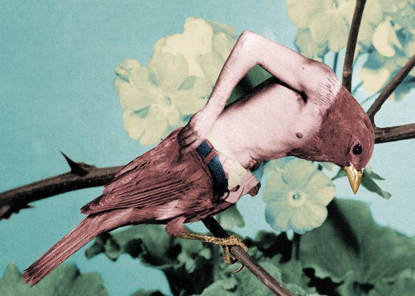 Jean-Lecointre, Birdy Man Man
