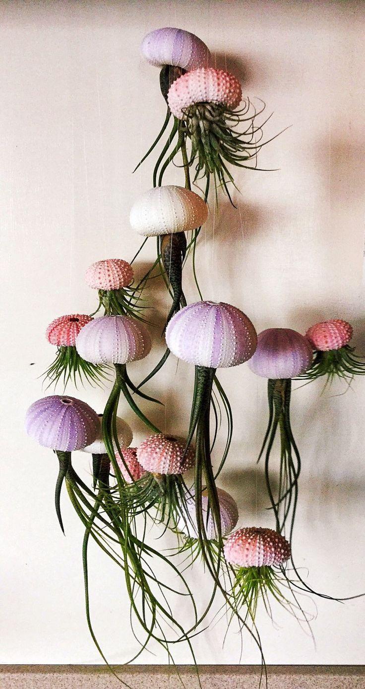Medusa – Luftpflanzen (Tillandsien) im Seeigel. So…