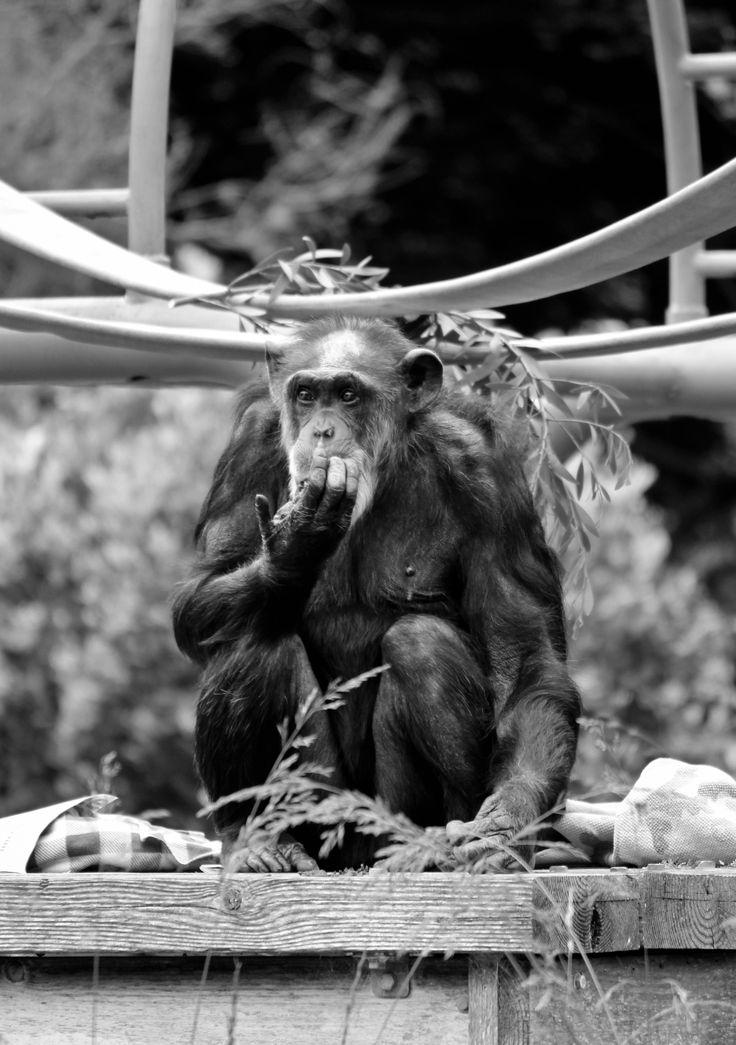 Www Bing Com1 Microsoft Way Redmond: 225 Best The San Francisco Zoo Images On Pinterest