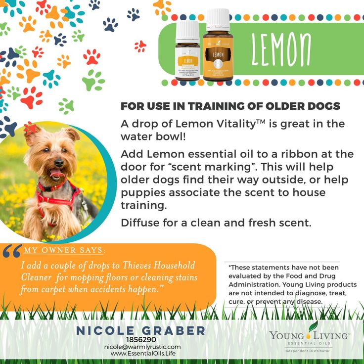 using essential oils for your dogs