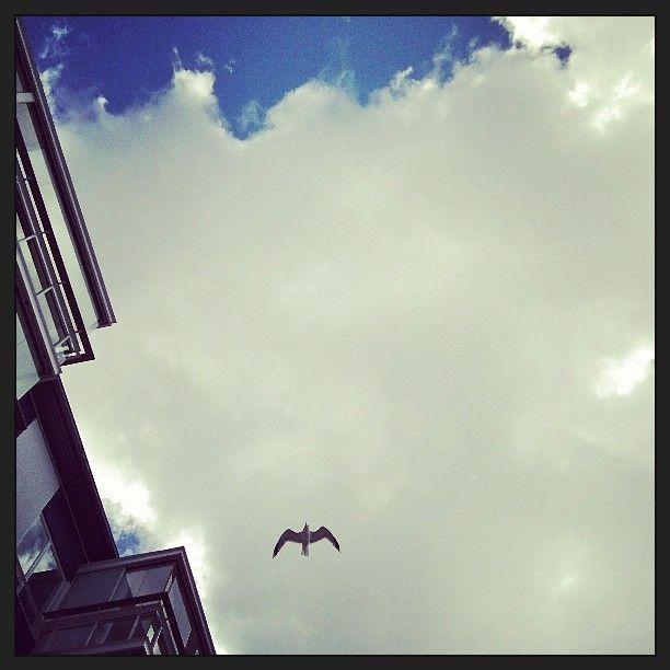 #Vuosaari #pilvet #lokki #lentää