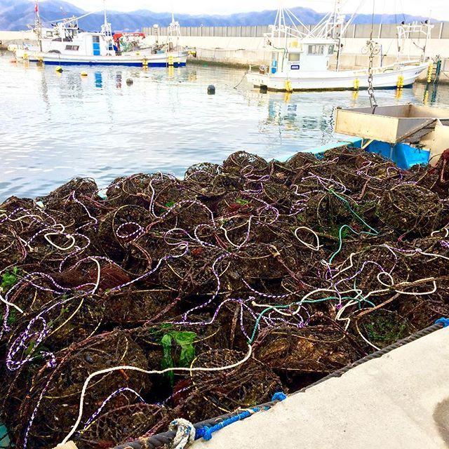 【nerihiko】さんのInstagramをピンしています。 《今日は45人も漁業体験的な感じでいらっしゃるらしいので、Lサイズと格闘決定。 まずは第一ラウンド。 #マルテン水産 #広田湾 #陸前高田 #小友町 #両替漁港  #牡蠣  #牡蠣養殖 #養殖いかだ #海 #船 #oyster #Rikuzentakata #Hirotabay #instagood #sea #Maruten》