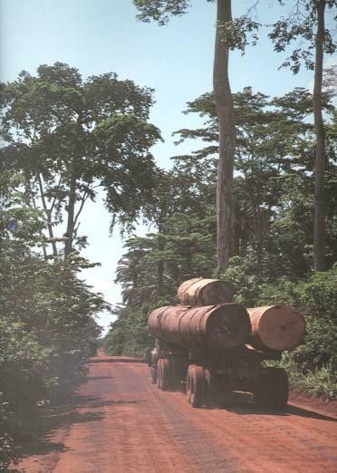 Images of Rainforest Destruction