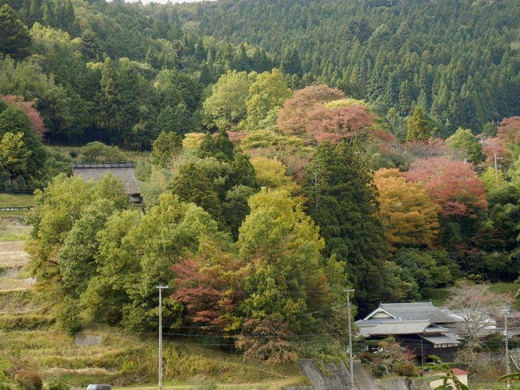 秋:大阪府能勢町