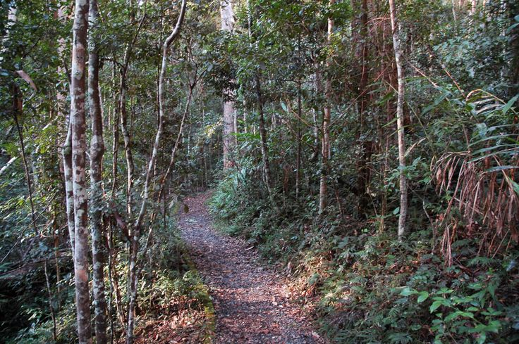 Thylogale Walking Track