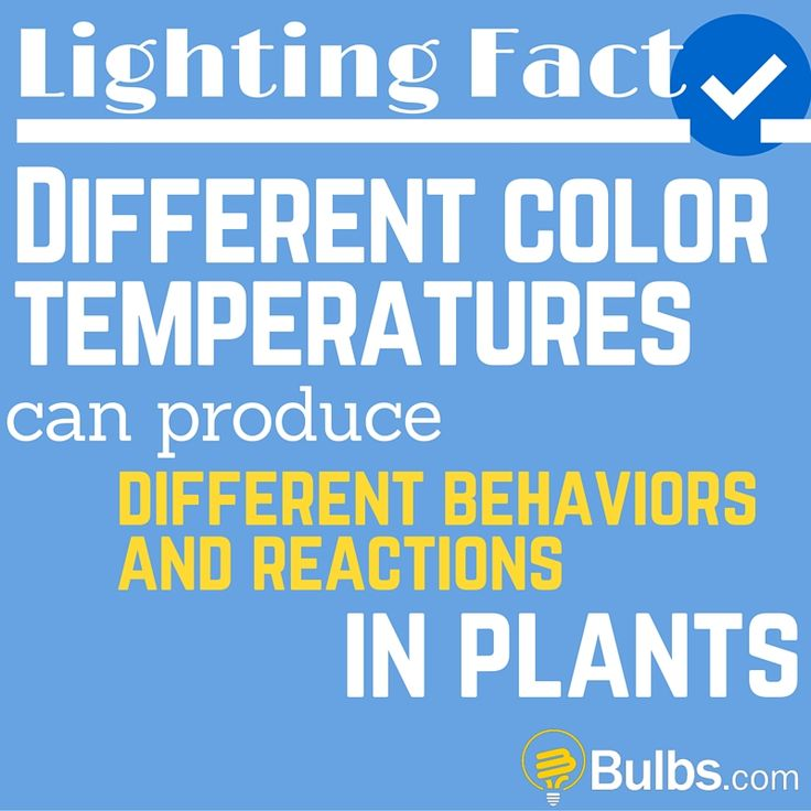 Lighting Fact: Different color temperatures can produce different behaviors and reactions in plants.