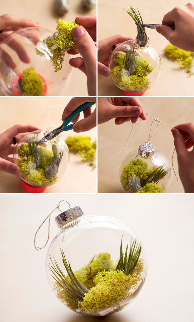 Your Christmas tree needs this DIY air plant + moss ornament.
