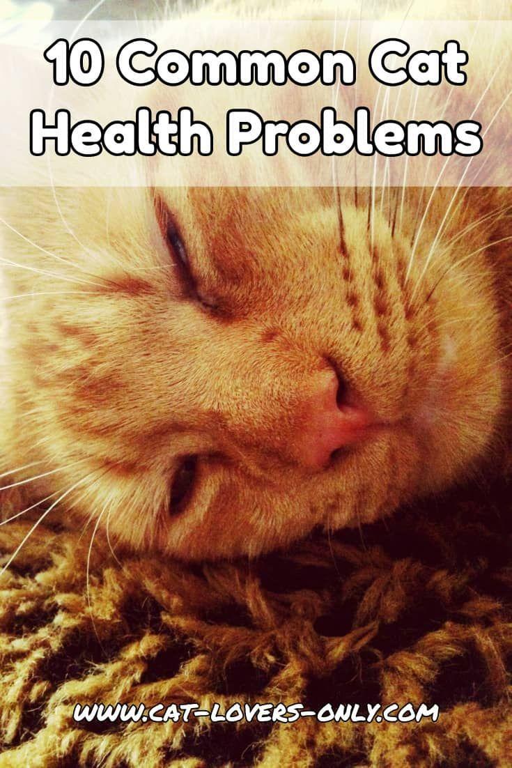 Common Cat Health Problems Often Seen Feline Health Issues Cat Health Problems Cat Diseases Feline Health