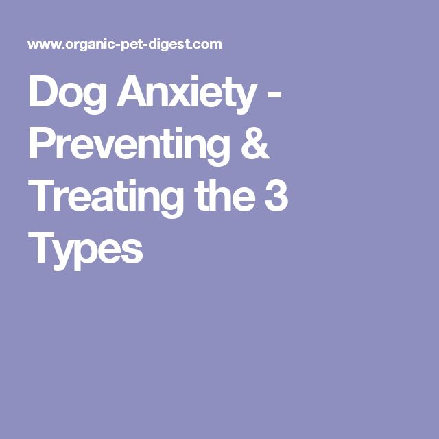 Dog Anxiety - Preventing & Treating the 3 Types