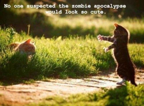 Cute Zombie Apocalypse: Zombies Apocalypse, Walks Dead, Hands, So Cute, Funnies Cats, Mornings Coff, Crosses, Kittens, Dance