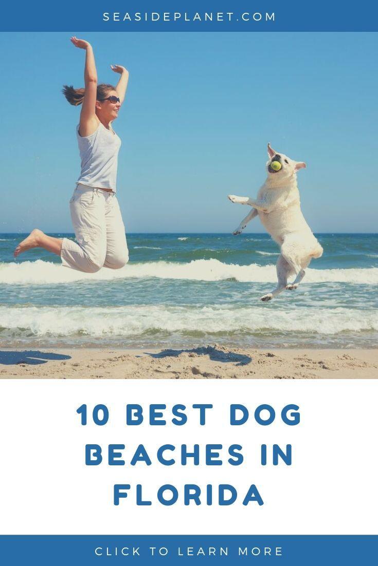 10 Best Dog Beaches In Florida Dog Beach Florida Beaches Dog Friendly Beach