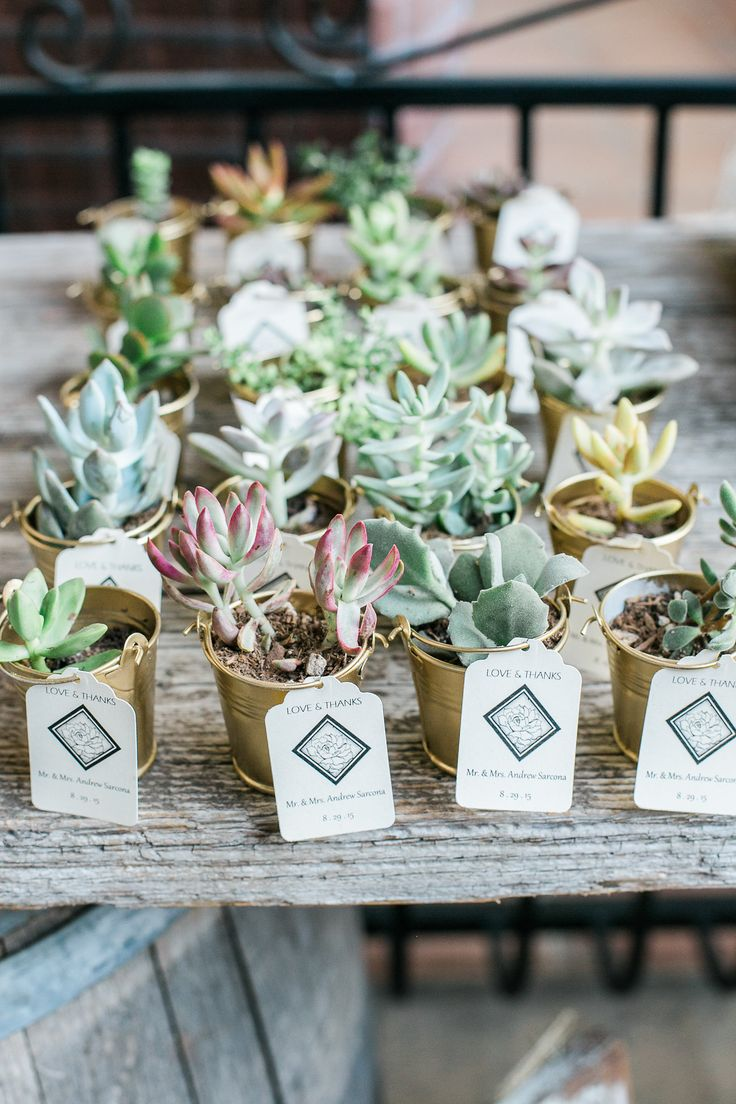 Wedding favor ideas: succulents! View the full wedding here: http://thedailywedding.com/2016/03/26/classy-vintage-wedding-becca-andrew/