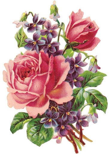 Violets and roses