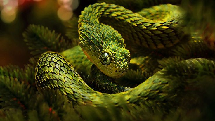 Green snake HD - wallpaper HD