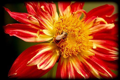 Red Flower. Jardin Botanico de Madrid
