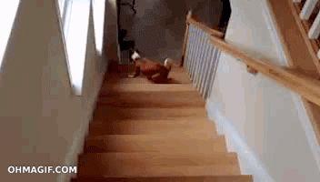 Cuando bajas las escaleras y te das cuenta que tu compañero de cuarto invitó a un montón de gente que no te agrada…