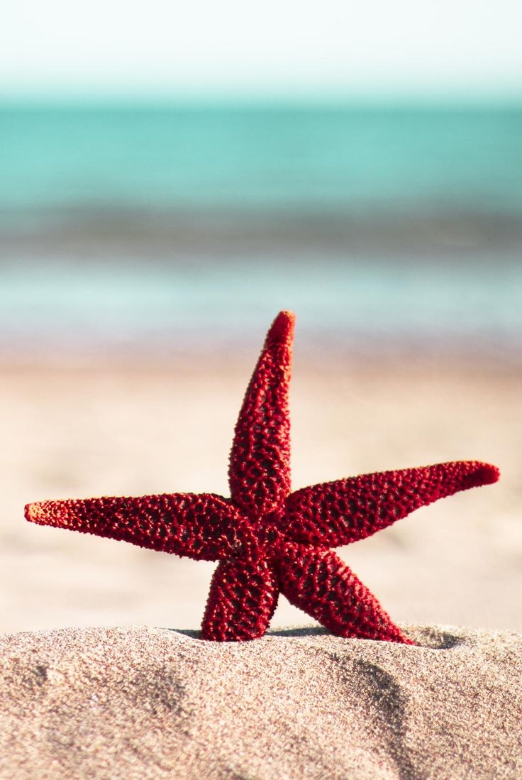 Pretty red starfish on the beach. My kind of vacation place!