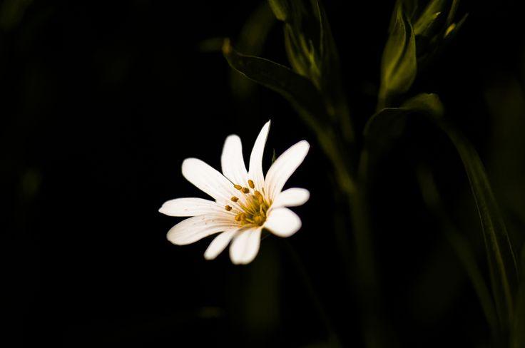 white&yellow by Graziella Serra Art & Photo on 500px